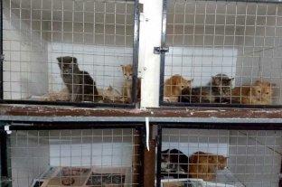 Secuestraron 40 gatos en mal estado en una vivienda del sur de la ciudad -