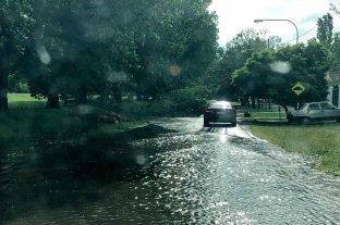 Calles inundadas y denuncias por árboles caídos, el saldo del temporal en Rosario -  -