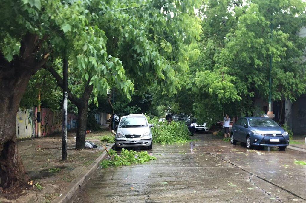 Temporal: Un hombre de 65 murió aplastado por un árbol en La Plata