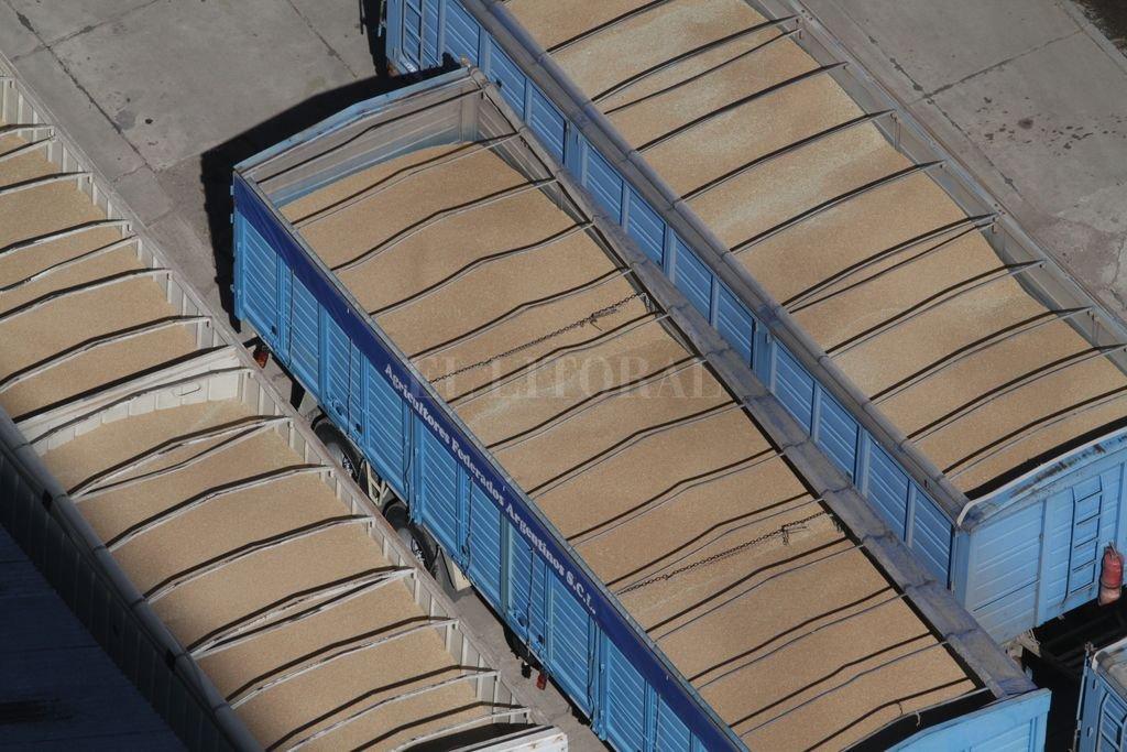 Diciembre récord para el trigo: subas de u$s 28 y las mayores exportaciones en 30 años