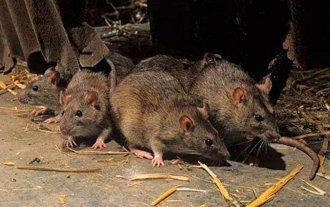 Chubut: Otro fallecimiento eleva a cinco las victimas fatales del hantavirus