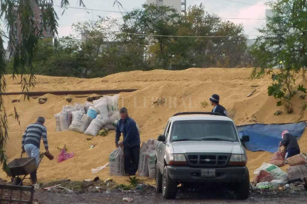 La imagen corresponde a 2014. Aquel día, el tren descarriló a la altura de barrio Santa Rosa de Lima y la carga (de esa formación era soja) quedó desaparramada. Un grupo de personas se presentó y cargaba los granos en una camioneta.  <strong>Foto:</strong> Archivo El Litoral