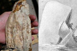 Identifican dientes de una ballena gigante similar a Movy-Dick en Rio Negro