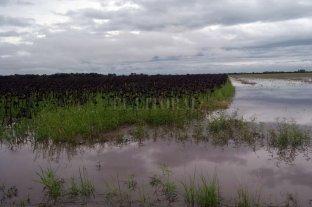 La superficie inundada en Santa Fe es de 3 millones de hectáreas