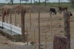 La rural de Tostado abre sus corrales para alojar hacienda evacuada