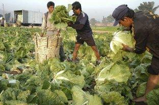 Del campo a la góndola, el precio de frutas y verduras se quintuplica -  -