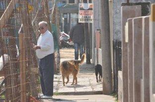 """El desagüe Espora en su limbo: sólo 16 empleados y """"muy pocos avances"""" - Esperando que se termine. Un vecino mira tras las rejas la zona de obra. El registro gráfico es de septiembre pasado.  -"""