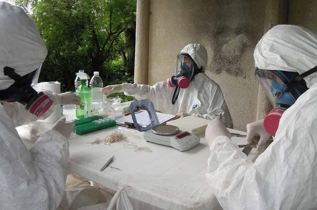 Durante el 2018, en Santa Fe se registraron 15 casos de hantavirus - Importante. Los pacientes que se infectan con hanta en la región central del país suelen vivir en zonas rurales. -
