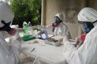 En 2018, en Santa Fe se registraron 15 casos de hantavirus - Importante. Los pacientes que se infectan con hanta en la región central del país suelen vivir en zonas rurales.