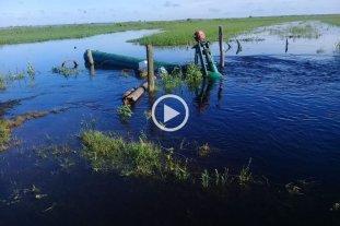 El 15% del arroz santafesino en riesgo por las lluvias -  -