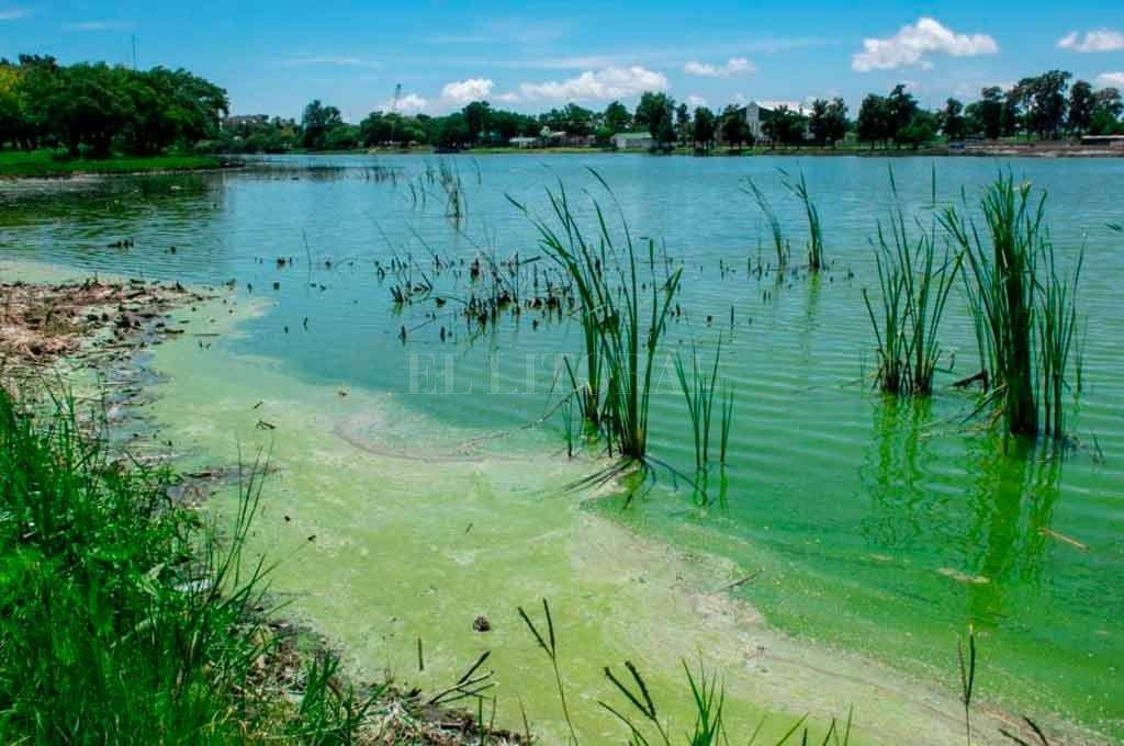 Concejales preocupados por las condiciones ambientales del lago en el Parque Sur
