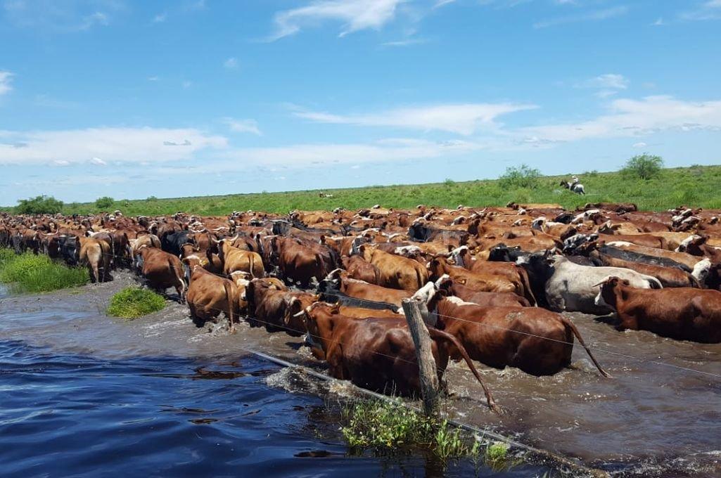 Productores del norte santafesino anticipan ventas por las inundaciones