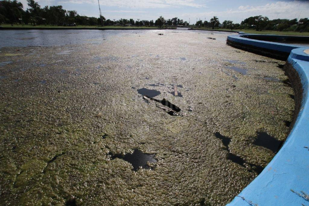 Actualmente el lago del Parque General Belgrano es un ejemplo de cuerpo eutrófico, es decir de acumulación de residuos orgánicos que causa la proliferación de ciertas algas.  </CREDITO>Foto: Mauricio Garín Crédito: Mauricio Garín