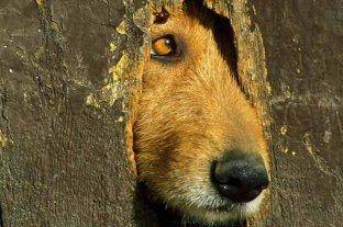 Lo condenaron por matar un gato  y una perra y por maltratar a sus animales -