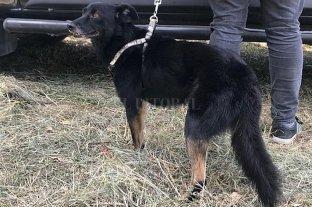 Un psicólogo de la Policía secuestró el perro de su tía - Spaidy fue recuperado sano y salvo en la ciudad de Recreo.