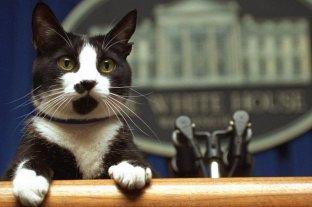 Día internacional del gato: conocé su historia - Socks fue el gato presidencial de la familia Clinton y el primero en habitar la Casa Blanca