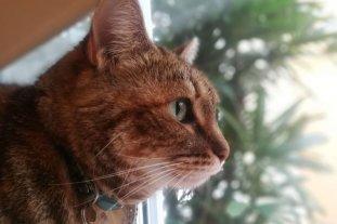 Día del gato: 20 curiosidades sobre los amigos felinos que no conocías