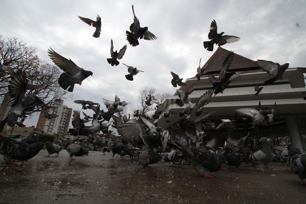 El palomar se inauguró en 1941 y siempre fue un lugar de concentración para las familias y los niños. Crédito: Mauricio Garín