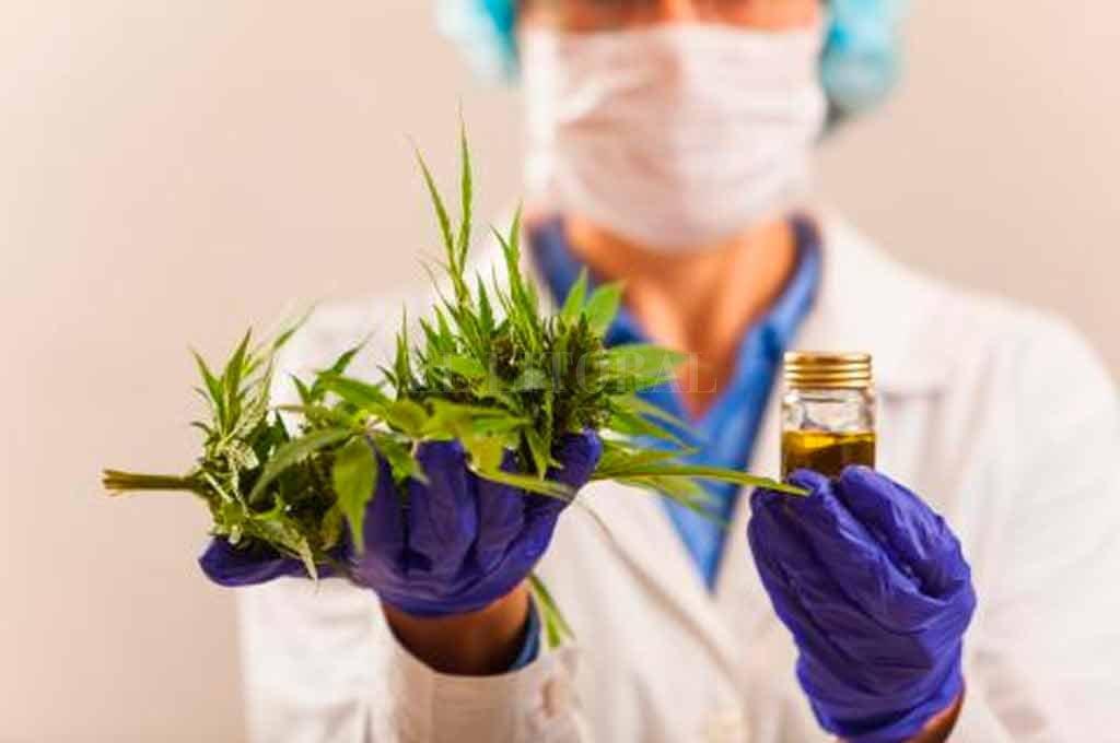 Cannabis medicinal: tres claves de la reglamentación