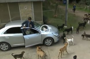 Robertito Funes Ugarte fue atacado en vivo por un grupo de perros -