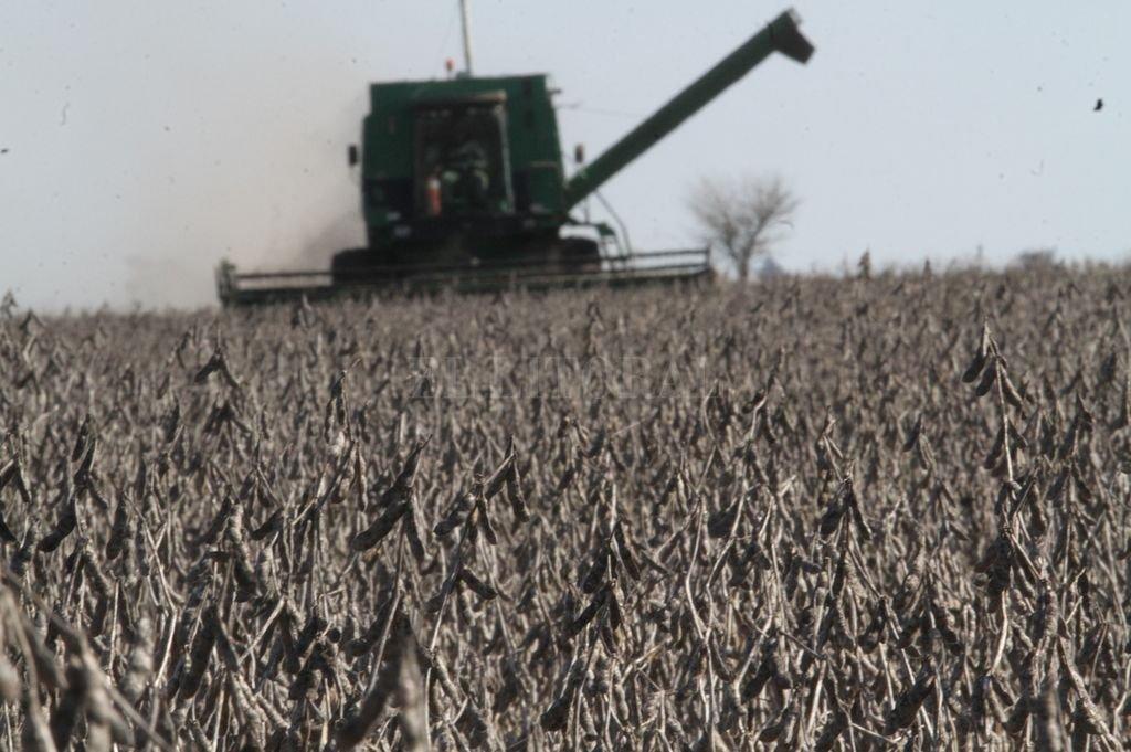 Adreani advierte: la soja sentirá la presión si no hay cambios en retenciones
