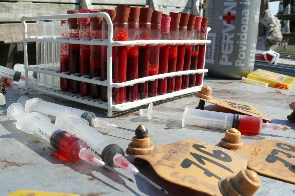 Ganaderos santafesinos piden replantear la lucha contra la brucelosis