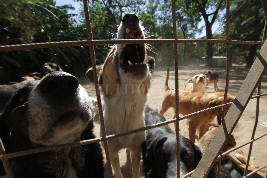 Espera. Los perros son curados y esperan luego por una familia que los adopte. Crédito: Mauricio Garín