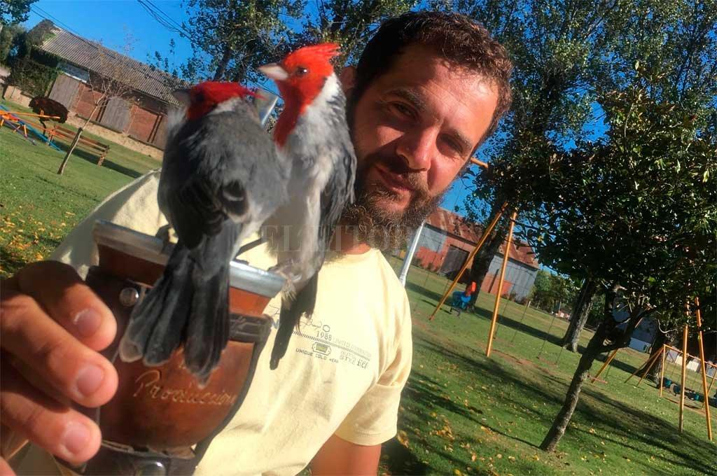 Joni, el encantador de cardenales
