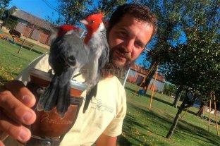 Joni, el encantador de cardenales - A los cardenales les gusta comer la yerba del mate