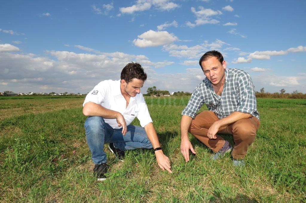 La alfalfa tiene equipo