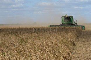 Ya se cosechó el 80 % de la soja