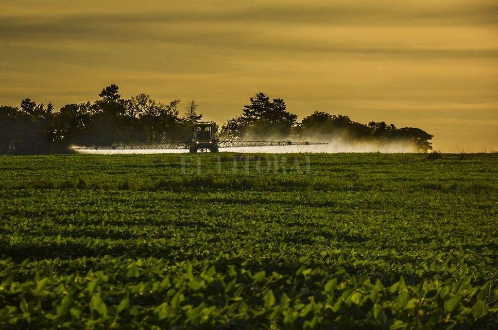 Delitos ambientales: para el ruralismo, una ambigüedad