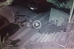 Viral: Un gato se enfrenta a una jauría de perros y sale victorioso