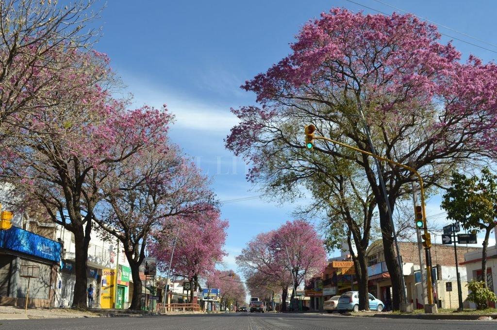 Vestida de rosa. Así luce avenida Luján, cada vez que los lapachos florecen.  <strong>Foto:</strong> El Litoral