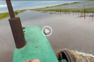 Inundaciones: peligra la fina en el noroeste santafesino
