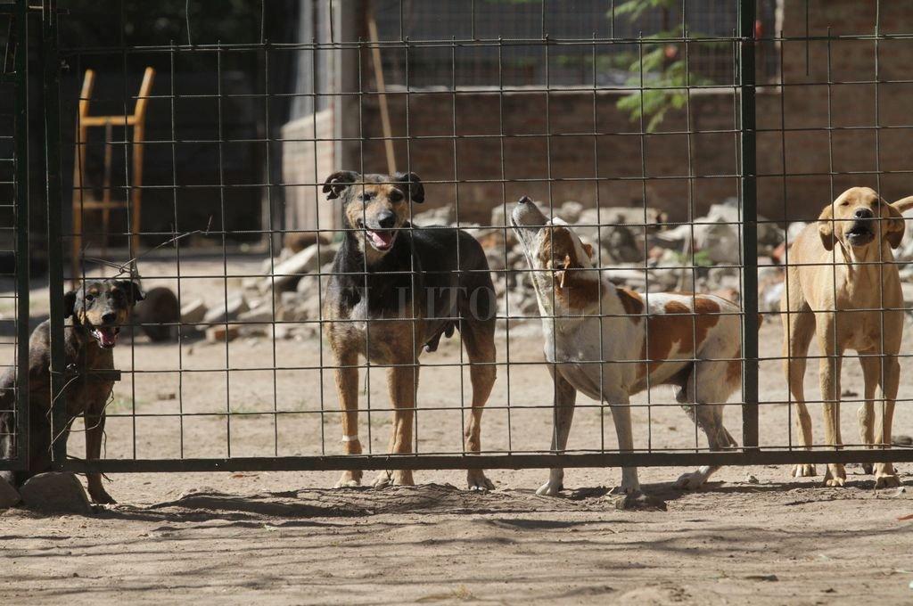 Delito. El maltrato animal está sancionado por la ley. <strong>Foto:</strong> Mauricio Garín