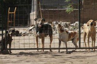 Convocan a inscribirse a un registro de guardadores para animales maltratados