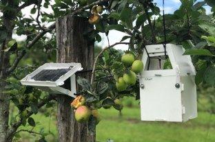 """Firma tecnológica lista para """"volar"""" al mercado - Los sensores: alimentación solar y detección temprana de plagas. El sistema avisa automáticamente al usuario."""