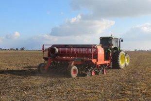 Comenzó la siembra de trigo