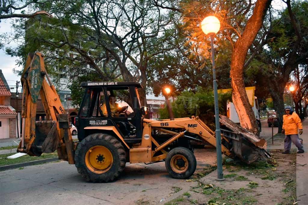 Consecuencias del fuerte viento en Santa Fe: ramas y postes caídos en la calle