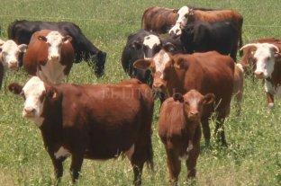 """Regulaciones más duras a las importaciones por los casos de """"vaca loca"""""""