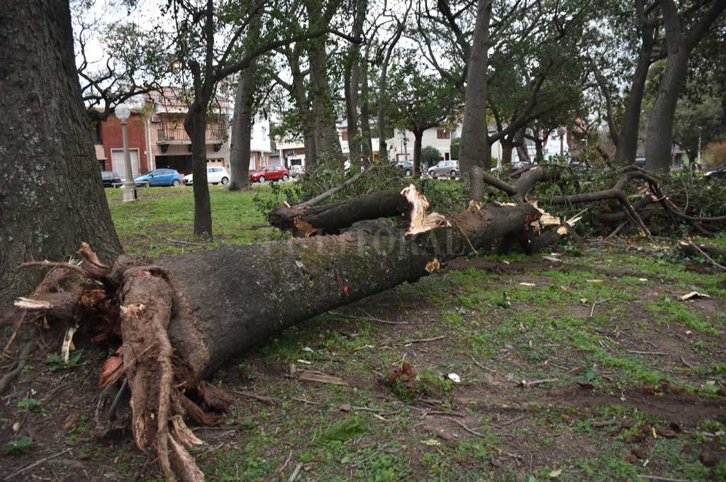 Ráfagas de viento de 79 km/h tumbaron árboles y dejaron varios barrios sin luz