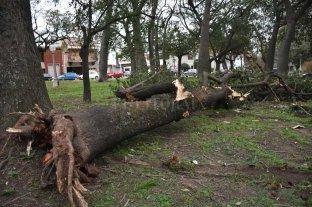 Ráfagas de viento de 79 km/h tumbaron árboles y dejaron varios barrios sin luz -