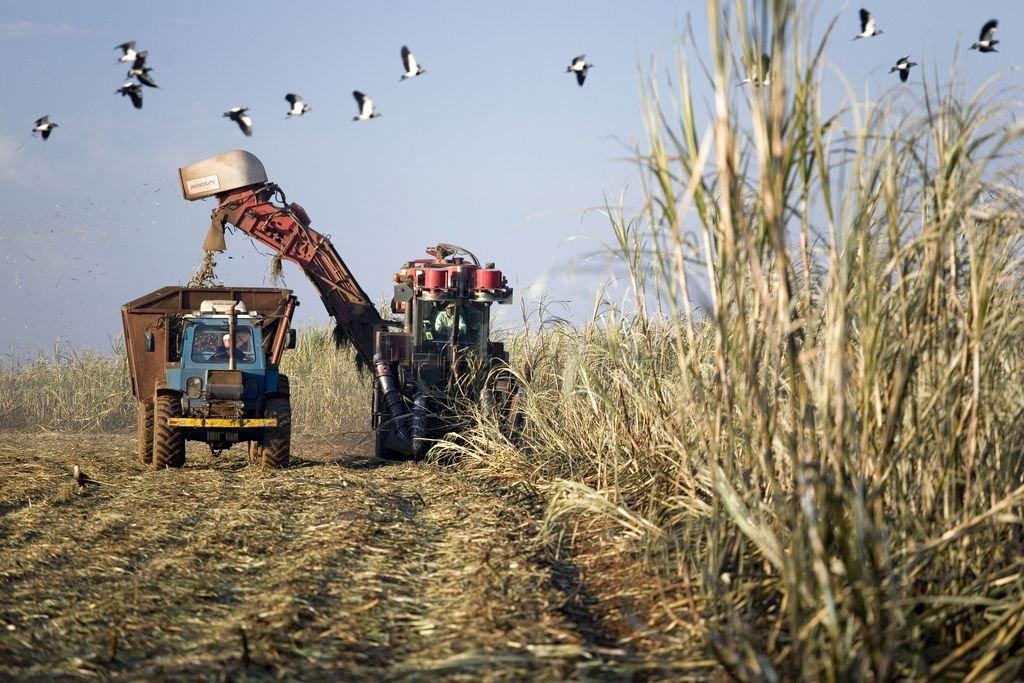 Cuenca cañera: diferencias ante la posibilidad de nuevos créditos para la siembra
