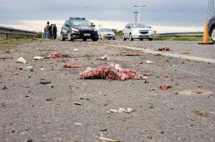 Un camión se desfondó y perdió medias reses de cerdo en la RN 168