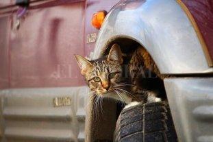 Un hábito que puede salvar a un gato