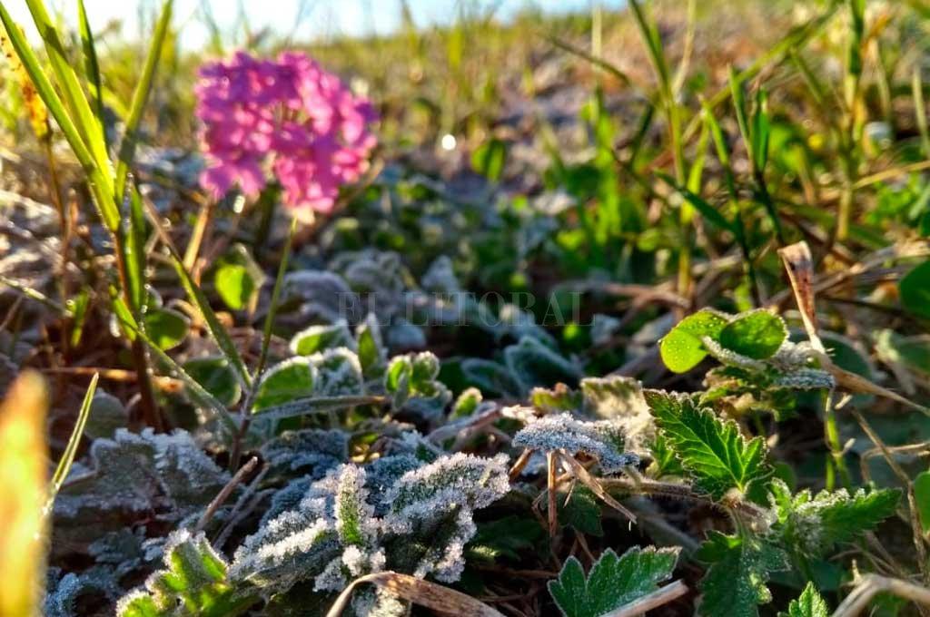 A la salida del Túnel Subfluvial, la helada se podía afectar entre la vegetación del lugar <strong>Foto:</strong> Mauricio Garín