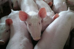 Auge del cerdo: en 2025 se consumirían 25 kilos anuales por persona