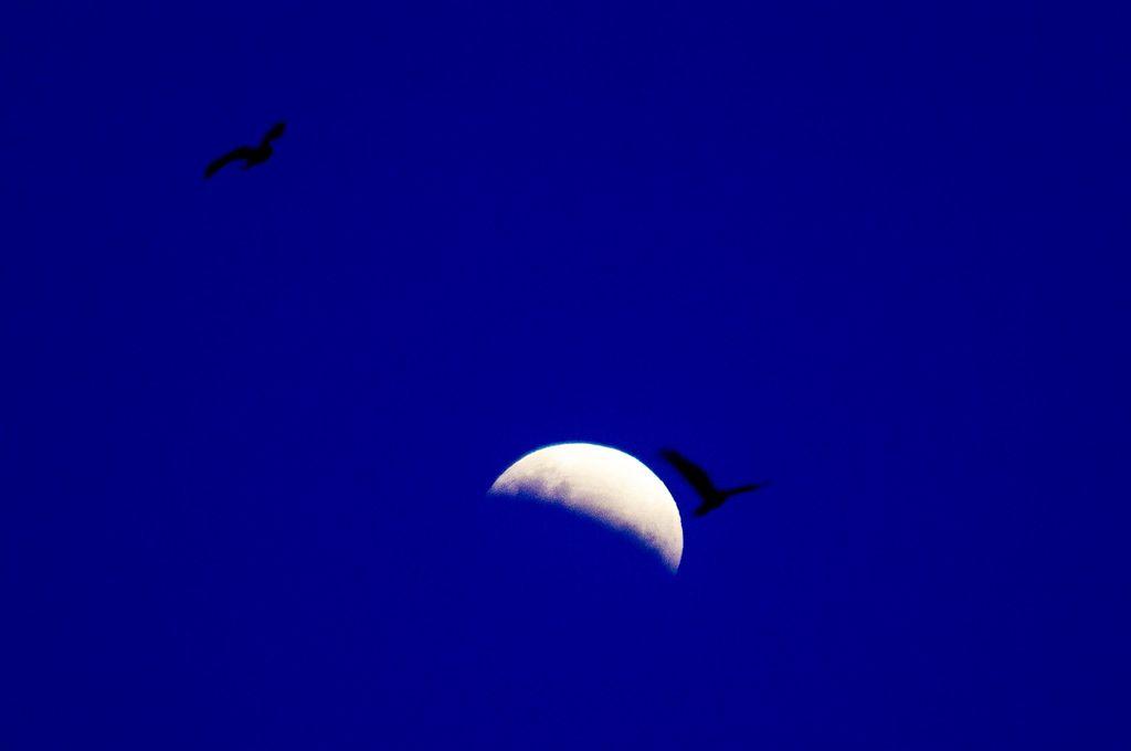 El segundo eclipse parcial de Luna de 2019 pudo verse desde Argentina