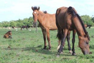 Ley de maltrato animal: se preservará la producción agropecuaria